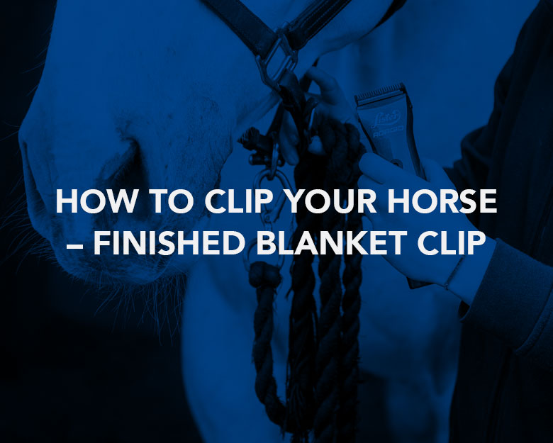 How to Clip Your Horse – Finished Blanket Clip